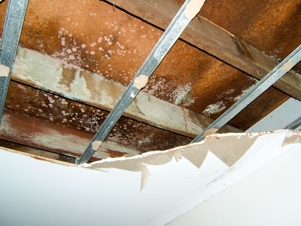 Sewage damage restoration